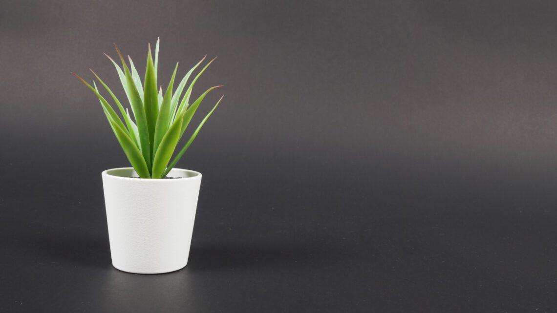 Künstliche Pflanzen für ein gemütliches Zuhause