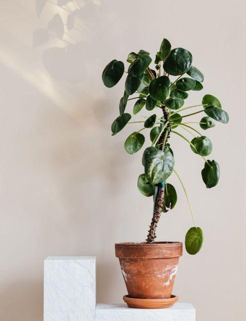 Billige Pflanzen